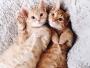 anyagrapes-petits-chats-roux-abandon-5