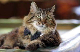 corduroy-chat-plus-vieux-oldest-living-cat-7