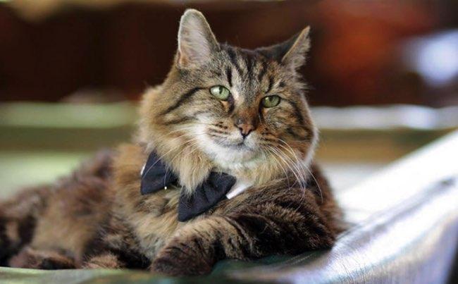, Ce Chat Adopté de 26 Ans est Le Plus Vieux et Heureux Chat du Monde