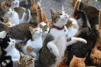 aoshima japon ile chats aoshima 8 331x219 - Quand l'Ile aux Chats Demande de l'Aide, Internet est Toujours La