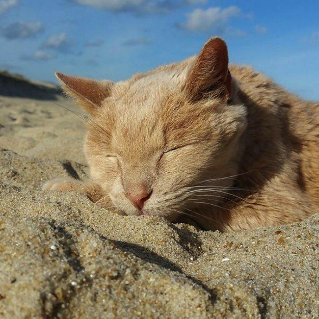 , Abandonné cet Adorable Vieux Chat Retrouve l'Amour et un Foyer