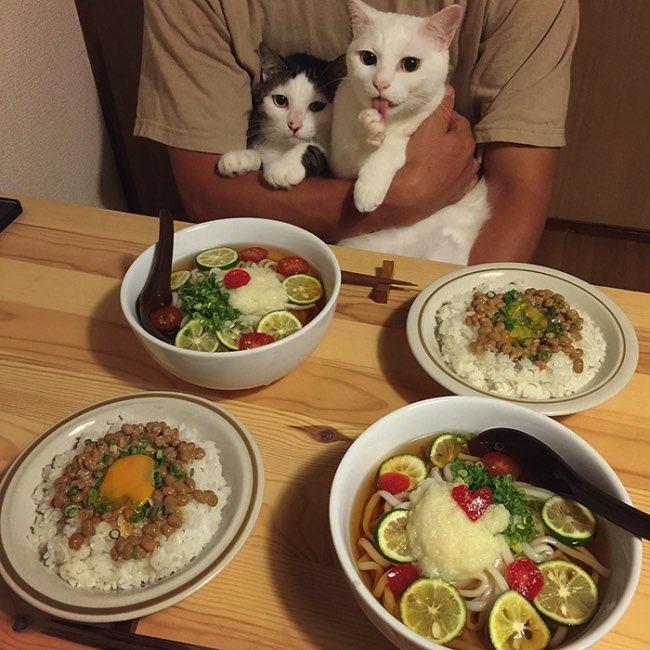 , Au Japon ces 2 Chats sont de Vrais Critiques Gastronomiques
