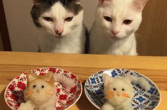 gastronomes chats japon naomiuno instagram 6 331x219 - Au Japon ces 2 Chats sont de Vrais Critiques Gastronomiques