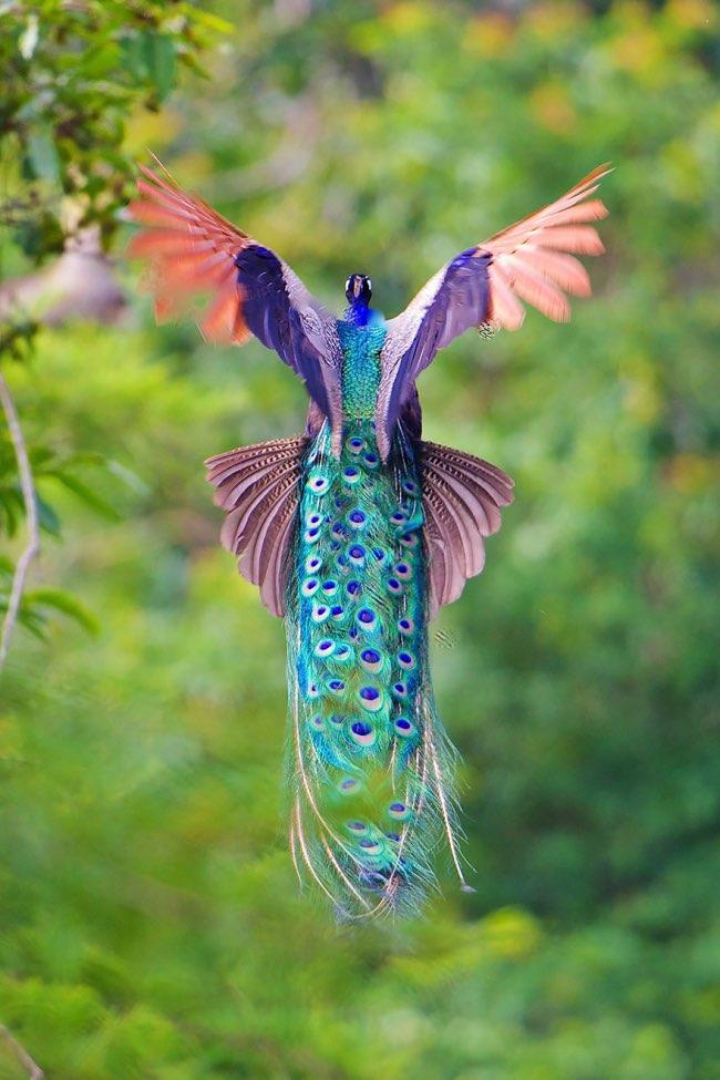oiseau ne peut pas voler