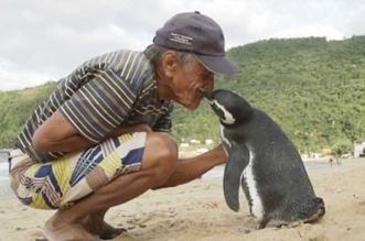 pingouin-sauvetage-vie-amitie-homme-bresil-3