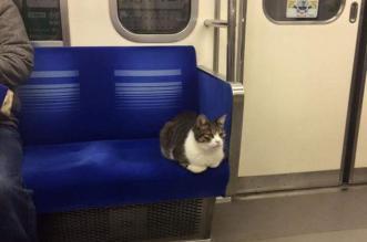 chat metro tokyo voyage seul 1 331x219 - Depuis 3 Ans ce Chat Prend Seul le Métro de Tokyo