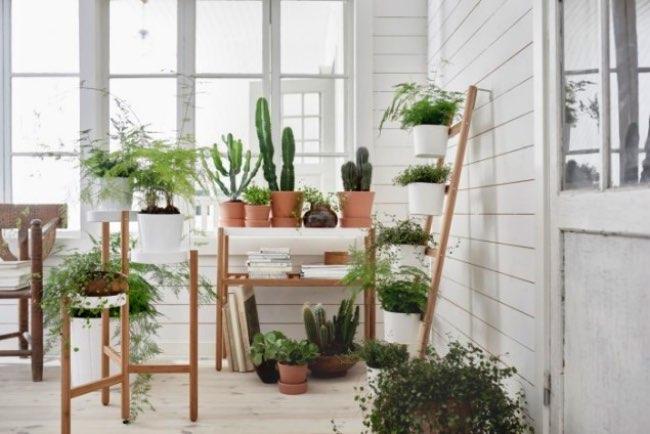 ikea satsumas plantes meubles 1 - Chez Ikea les Plantes d'intérieur Prennent Hauteur et Style