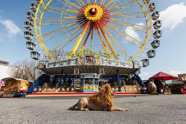 , Trouvé dans les Poubelles ce Chien Devient le Roi Lion de la Ville