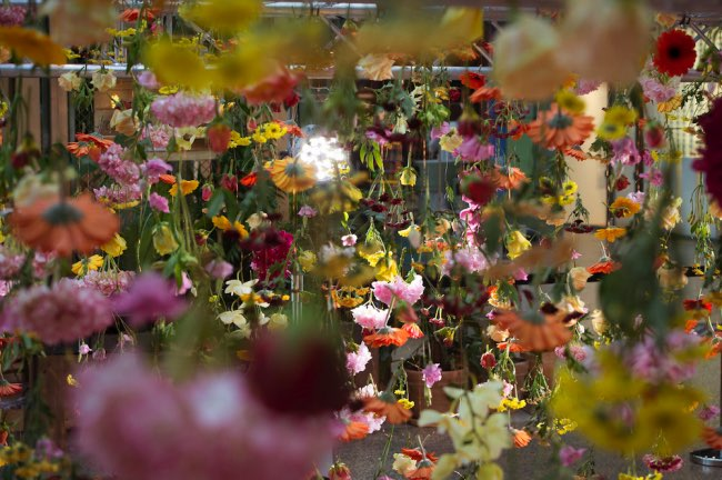 rebecca-louise-law-jardin-suspendu-fleurs-berlin-8