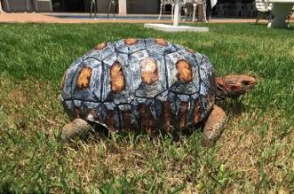 freddy-tortue-carapace-imprime-3d-greffe-2