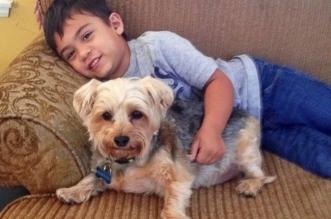 jacob tumalan autiste carson animal shelter refuge 3 331x219 - Ce Jeune Autiste Raconte de Belles Histoires aux Chiens Abandonnés