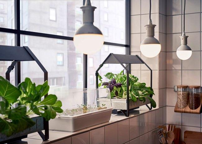 , Avec Ikea Cultivez toute l'Année à la Maison votre Jardin Hydroponique