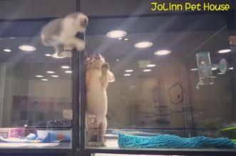 chat chien animalerie chat evasion chiot 1 331x219 - Ce Chaton s'Evade de son Box pour Retrouver son Ami le Chiot