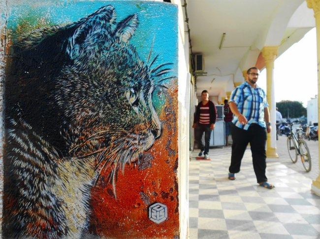, Portraits Urbains de Chats, ces Fascinants Observateurs !