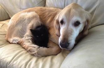 chien chat cancer maxwell forsberg 2 331x219 - Quand leur Chien Perd son Compagnon de Jeu, Ils Adoptent un Adorable Chaton