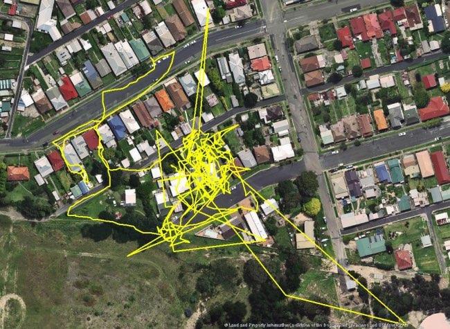 , Les Escapades Nocturnes des Chats Révélées en GPS