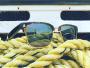 norton-point-lunettes-soleil-solaires-plastique-ocean-5