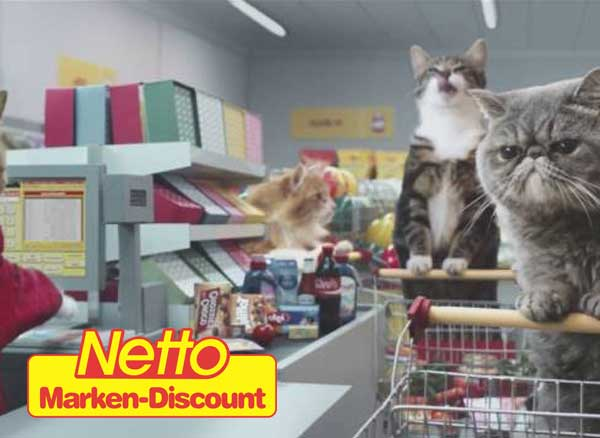 video virale buzz chats supermarche netto 1 - Les Chats Font leurs Courses au Supermarché Netto (video)