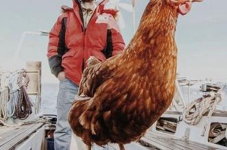 voyage-bateau-poule-guirec-soudee-1