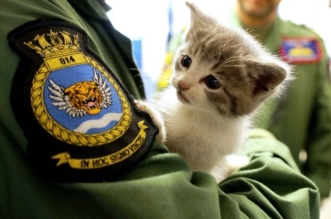 chat-chaton-royal-navy-mascotte-1