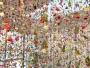 installation-fleurs-rebecca-louise-law-beauty-decay-art-8