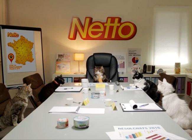 , Des Chats au Conseil de Direction des Supermarchés Netto (video)