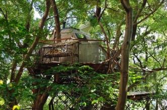 japon salon the nid oiseau arbres centenaire 8 331x219 - Ce Nid Geant est un Salon de Thé Perché dans un Camphrier de 300 ans