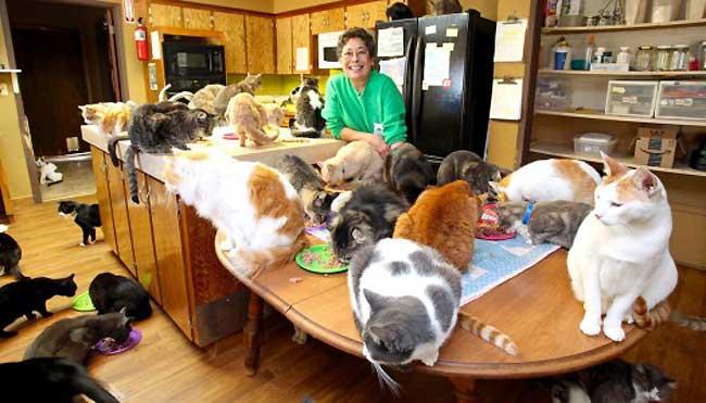 , Les Chats Stars Cole et Marmalade Visitent le Sanctuaire 'Cat House on the Kings'