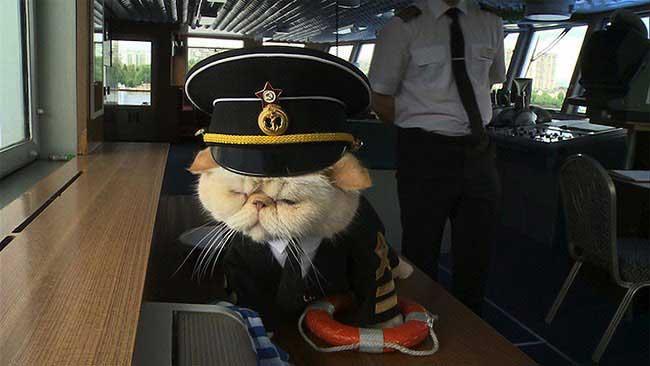 , Ce Chat Persan est le Capitaine d'un Navire de Croisière Russe