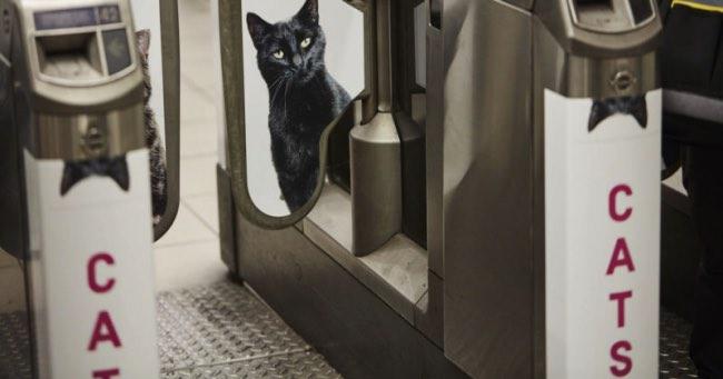 , Des Chats sur les Panneaux Publicitaires du Metro de Londres