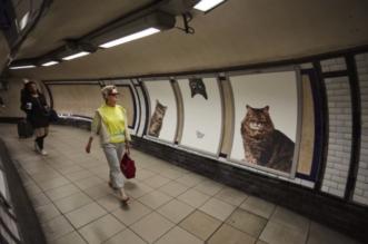 metro-londres-glimpse-cats-pubs-chats-street-art-9