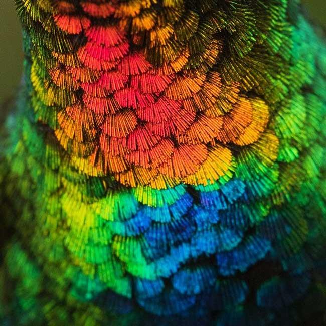 , Gros Plan sur le Colibri et sa Fascinante Palette de Couleurs