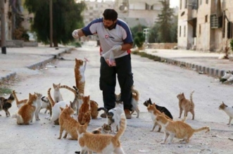 syrie-chats-alep-cat-man-5