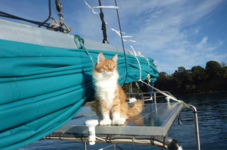 maine-coon-chat-second-capitaine-bateau-1