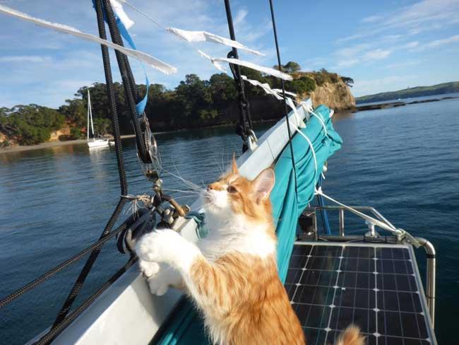 , Ce Chat Permet à son Maître Marin Sourd d'Entendre en Mer