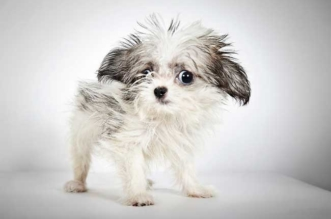 portrait chiens abandonnes adoption richard phibbs 1 331x219 - Portraits de Mode de Chiens Abandonnés en Attente d'Adoption