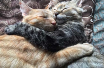 luna-louie-chats-inseparables-adoption-1