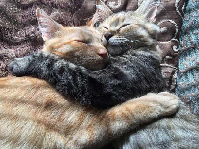 Luna Louie Chats Adoptés Belle, Libérés de l'Enfer des Refuges, ces 2 Adorables Chats ne se Quittent plus