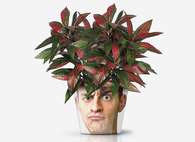my facepot pot fleurs personnalisable photo illustration 7 - Donner de Drôles de Têtes à vos Pots de Fleurs (video)