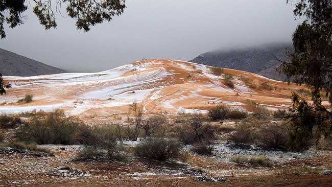 sahara-neige-desert-algerie-, Féérique, Il Neige dans le Désert du Sahara, le plus Chaud au Monde…