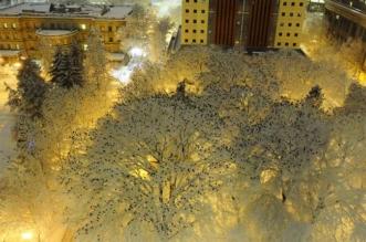 nuee oiseaux arbres hiver neige portland 1 331x219 - Nuée d'Oiseaux dans les Arbres Couverts de Neige à Portland