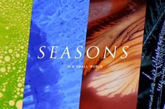 quatre saisons microscope macro photo beauty science 331x219 - Les 4 Saisons Vues à Travers l'Objectif d'un Microscope (video)