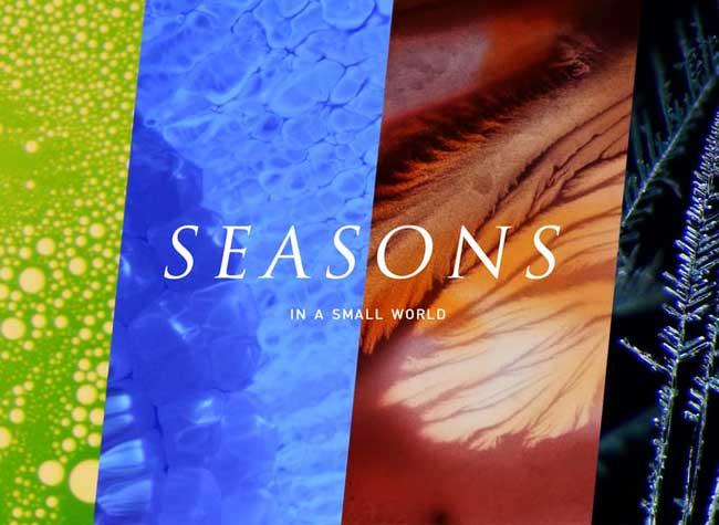 , Les 4 Saisons Vues à Travers l'Objectif d'un Microscope (video)