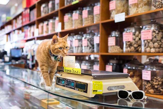 , A la Rencontre des Chats dans les Boutiques de New York
