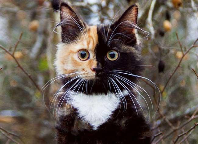 Photos de la chatte et le visage