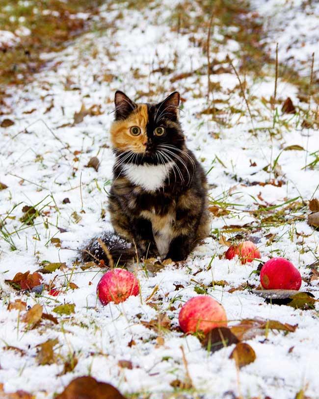 , Yana, le Chat aux Deux Visages à la Beauté Unique