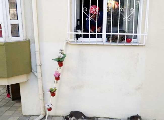 Echelle chats maison Turquie, Elle Installe une Echelle à sa Fenêtre pour que les Chats Errants Puissent Rentrer