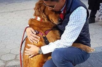 golden retriever chien calins passants new york 2 331x219 - Ce Chien Golden Retriever Caline les New Yorkais à Chaque Coin de Rue