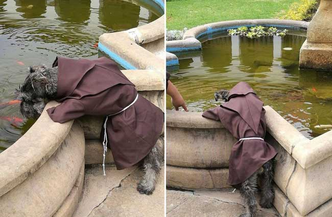 adoption chien monastere, Adopté ce Chien est Aujourd'hui Frère dans un Monastère Bolivien