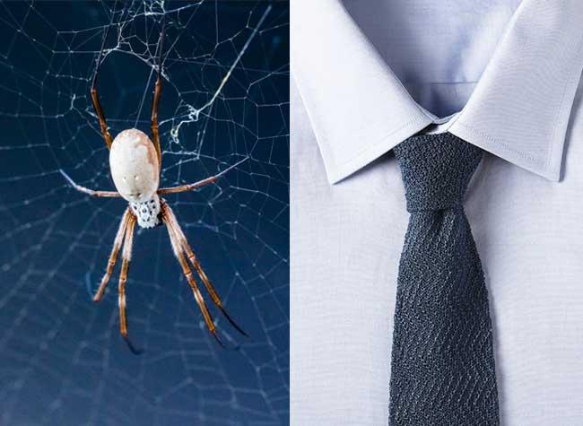 cravate areignée soie, Cravates en Soie d'Araignée 100% Naturelle, le chic du chic ! (video)